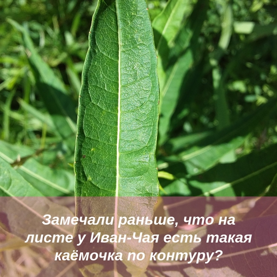 kak-my-perestayom-videt-realnost