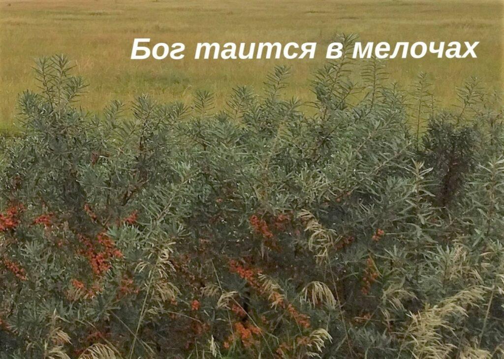 ne-svyataya-istoriya